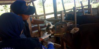 Pemeriksaan kesehtan hewan kurban oleh Dinas Peternakan Kabupaten Gowa bersama instansi terkait. (BERITA.NEWS/ACP).