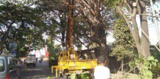 Dinas Lingkungan Hidup Kabupaten Gowa saat memangkas pohon. (Foto: berita.news/ist).